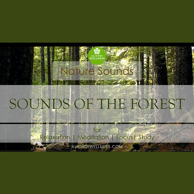 Nature Sounds of the Forest